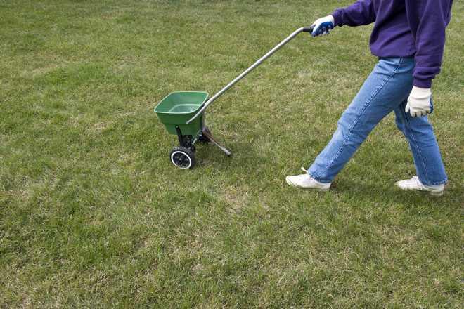 entretien pelouse apres scarification