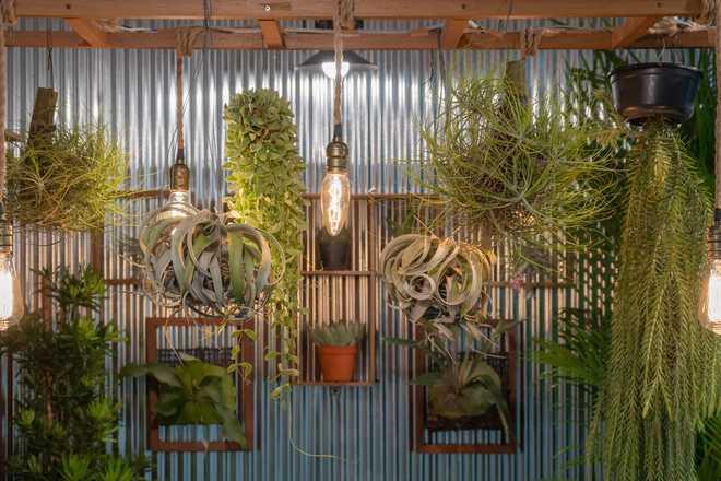 faire un petit mur végétal intérieur