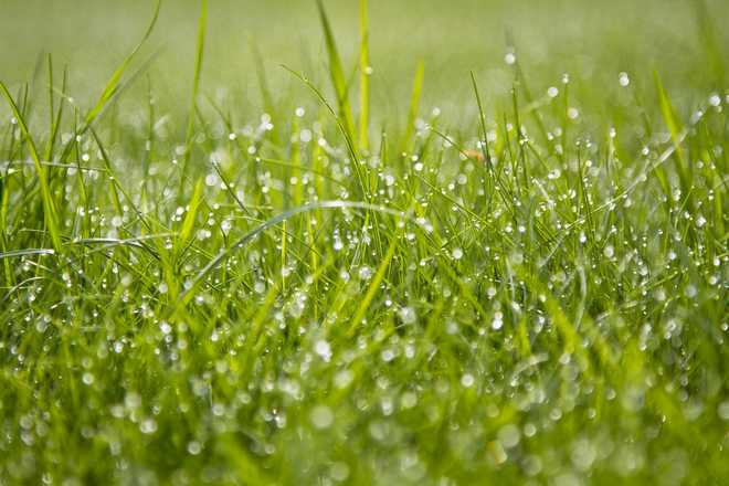 pelouse entretien mars