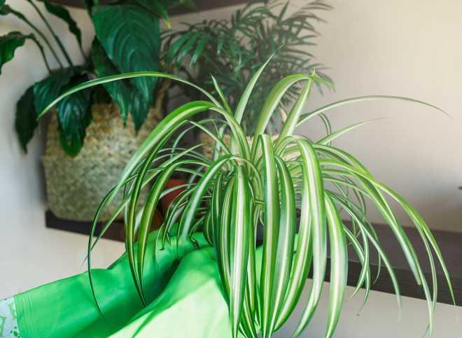 plantes d'intérieur sur des étagères