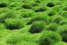 je ne veux plus de pelouse