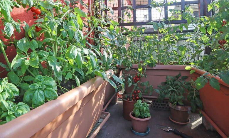 petit potager balcon