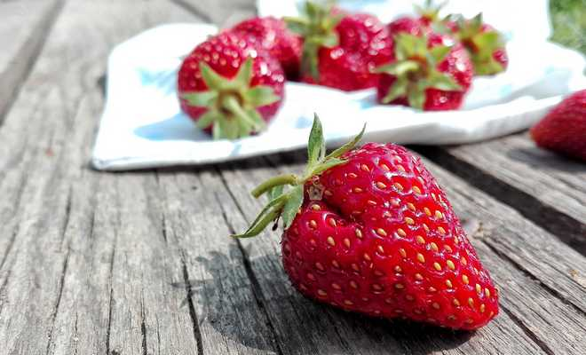 types de fraisiers