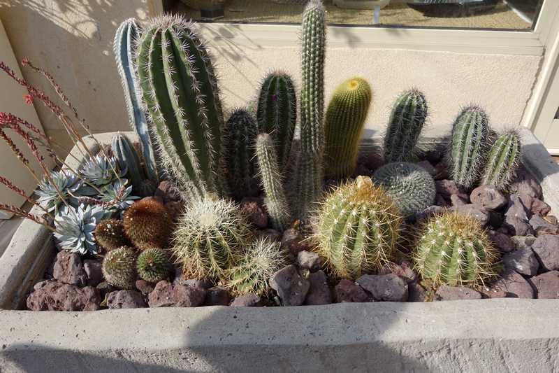 créer un mini jardin de plantes grasses