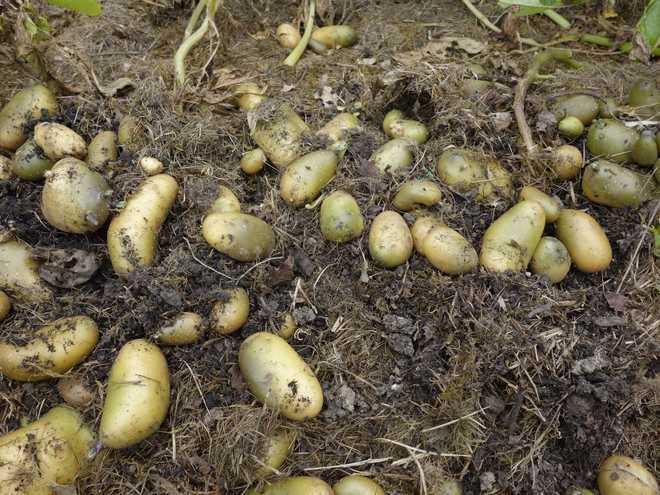 légumes facile à faire pousser