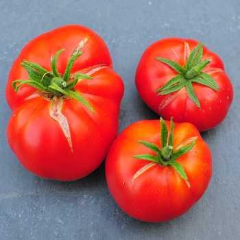 meilleures tomates