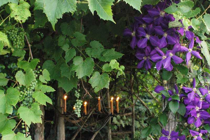 pergola plantes grimpantes