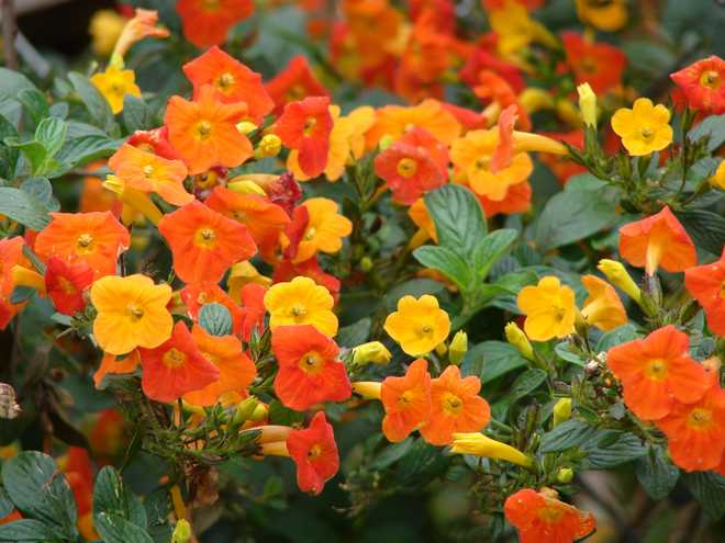 plante exotique jardin