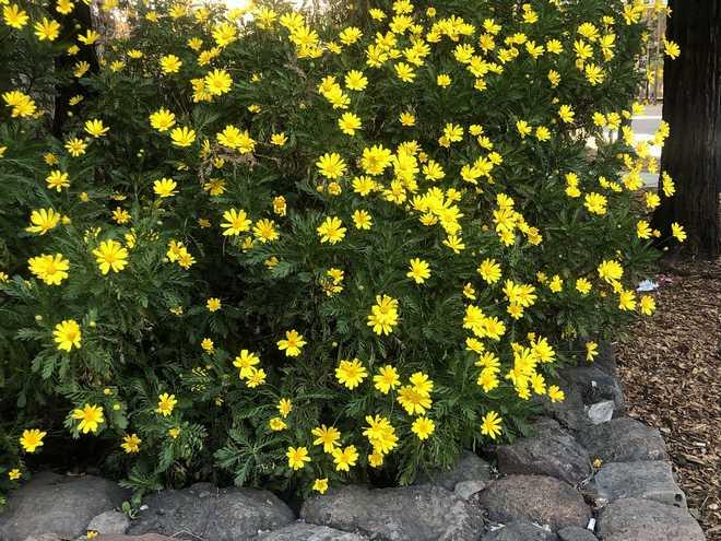 plante exotique qui peut resiste au froid