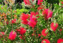 plante exotique rustique