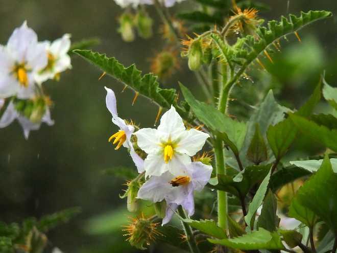 plante exotique rustique dehors