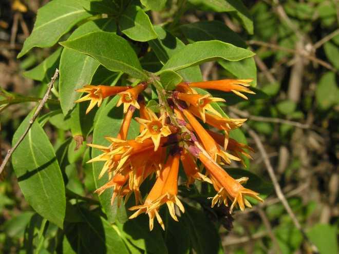 plante tropicale rustique