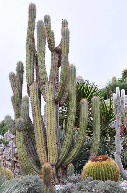 plantes de rocaille pour terrain sec
