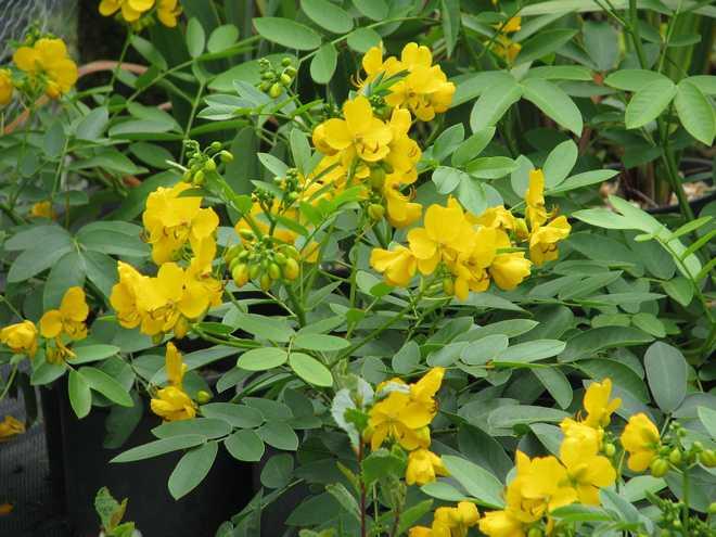 plantes exotiques extérieur