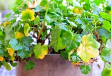 maladie des plantes
