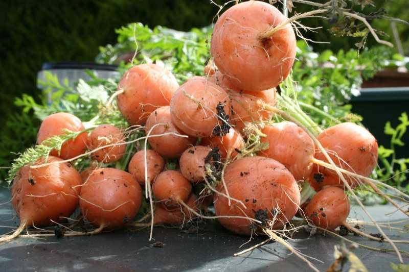légumes miniatures