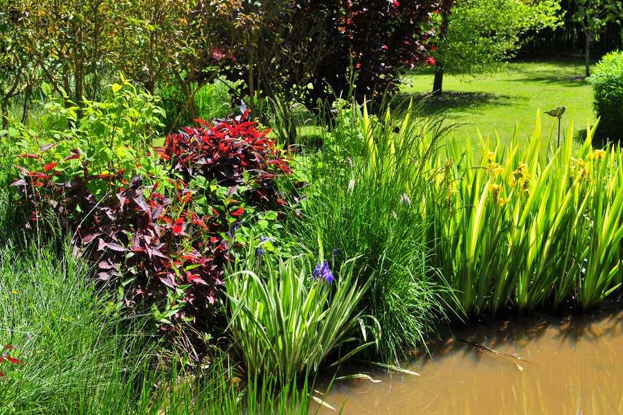 profondeur de plantation de splantes aquatiques