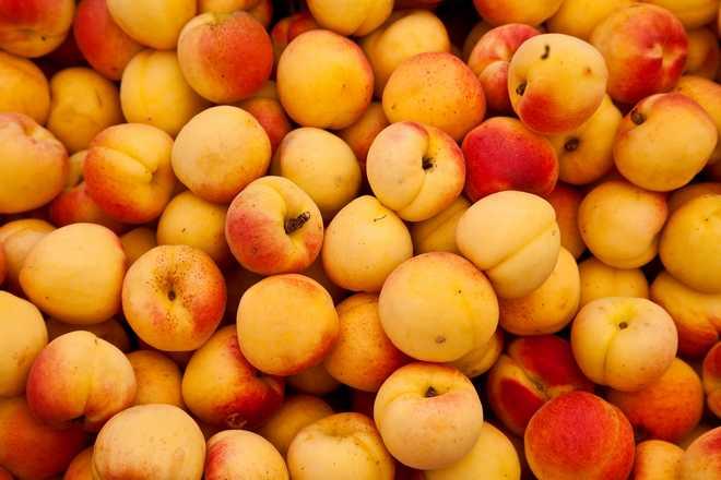 variété d'abricot pour confiture
