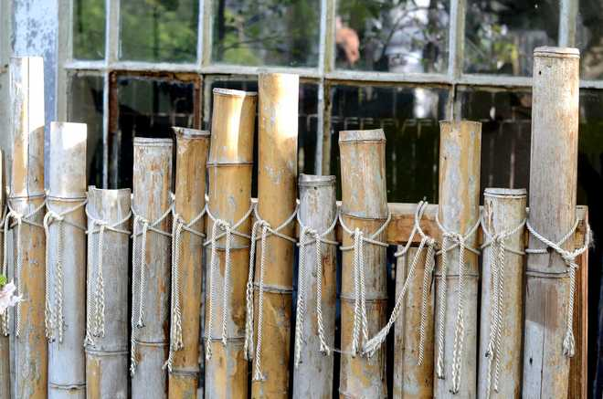 cloture en bambou