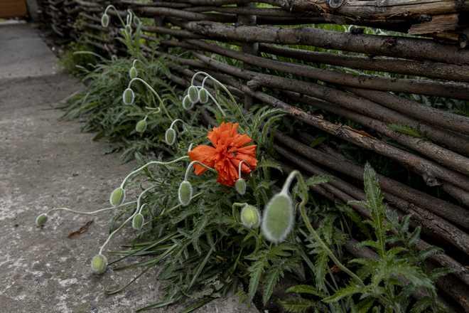 clôture en bois de noisetier