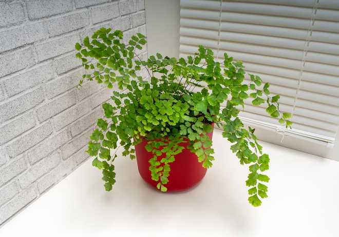 quelle plante dans une pièce peu lumineuse