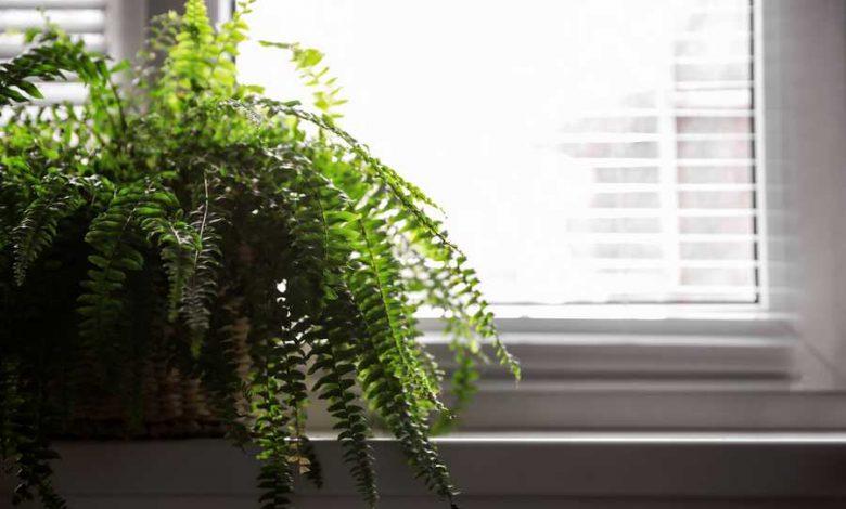 quelle plante verte pour une pièce sombre