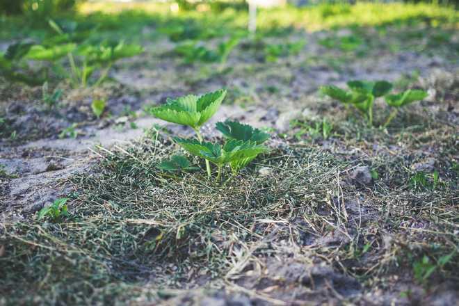 comment rendre fertile une terre sableuse