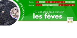 fiche 10 conseils cultiver feve 2